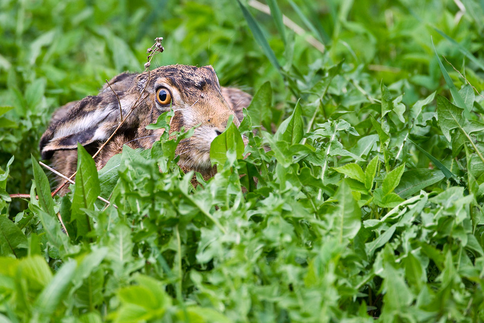http://nothingman.info/960/Animaux/Death%20of%20hase.jpg